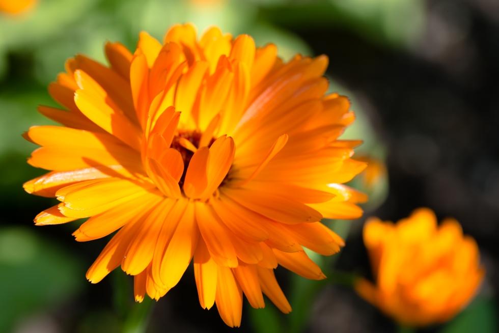 blomma av ljus