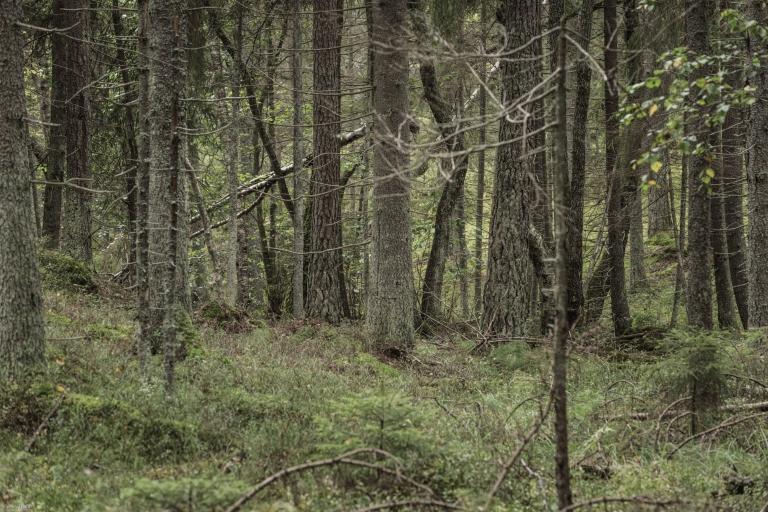 Tyresta nationalpark (201 av 308)70.0-300.0 mm f-4.5-5.6